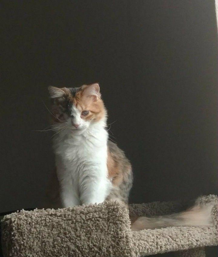 Surveying kingdom - cat, pets - hazelspikes | ello