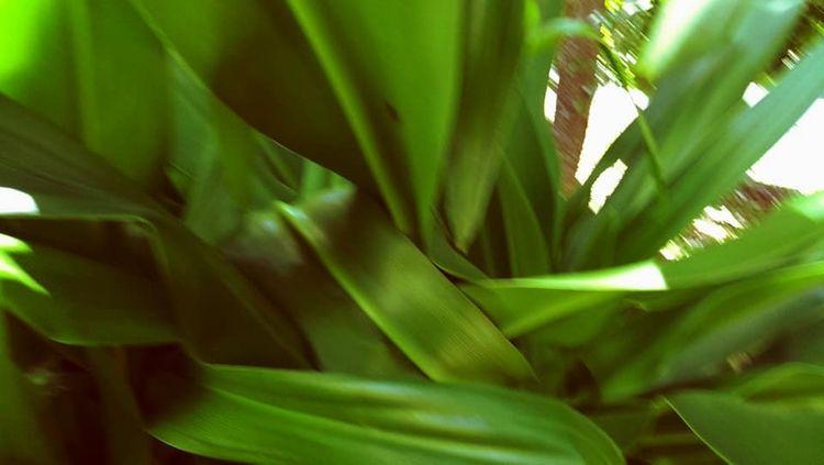 la impressiantéee folha selvage - amoni | ello
