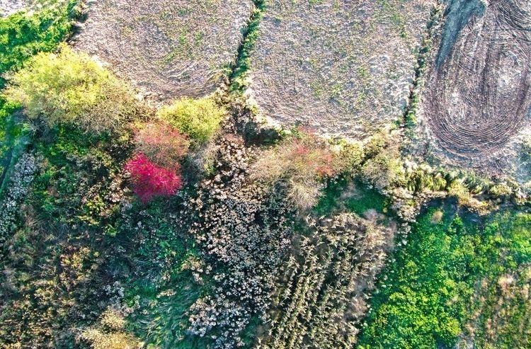 red tree marshes. Kite aerial p - kap_jasa | ello