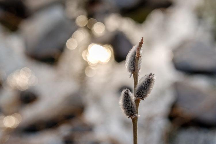 photography, naturephotography - berryphillips | ello