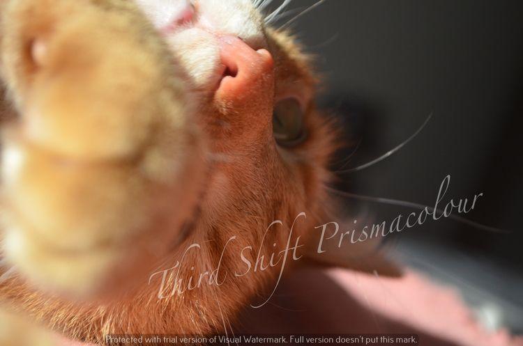 pictures - slothmonkey | ello