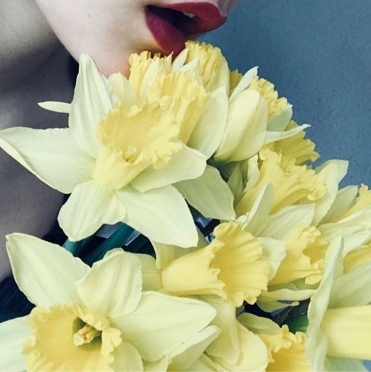 love - flowers, daffodils, spring - lumire | ello