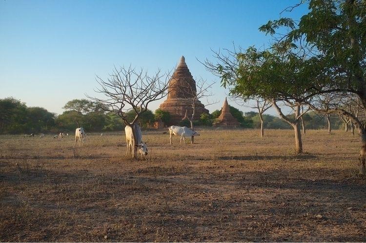 Burma, Golden Land (travel phot - imanfattah | ello