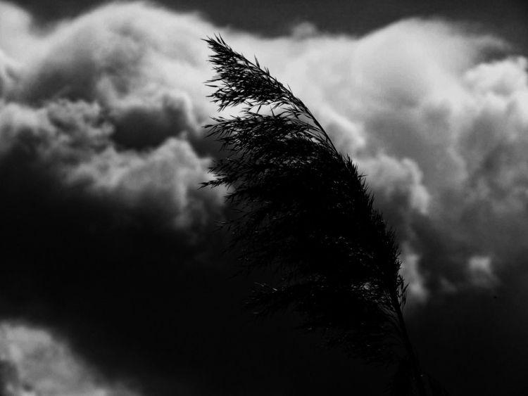 storm - EarlyRain - earlyrain | ello