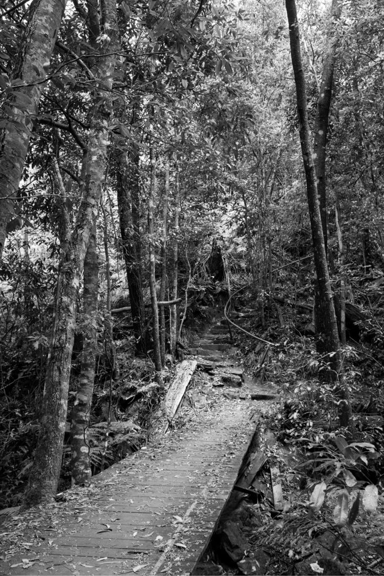 monochrom, bush, nature, forest - michaeljolliffe | ello