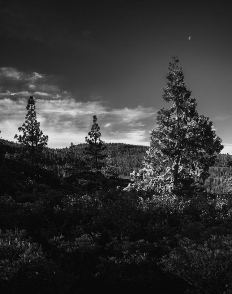 trees Desolation Wilderness - Landscape - aaronvizzini | ello