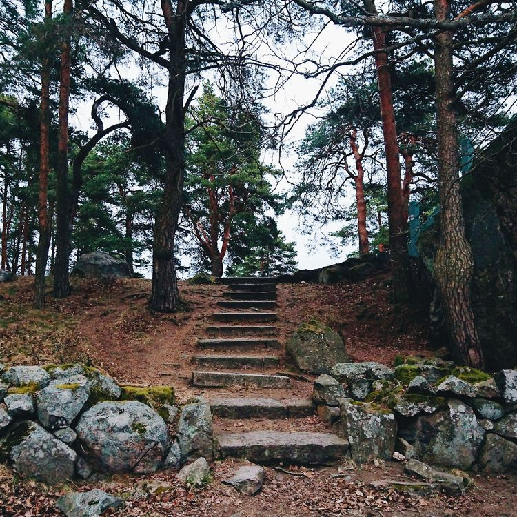forest, stairs, walk - themoonlitroad | ello