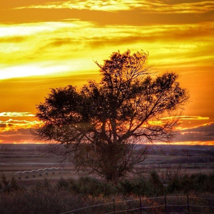 Golden morning - introleftedness | ello