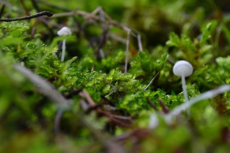 Mushrooms nature - ellophotography - carleigh_m | ello