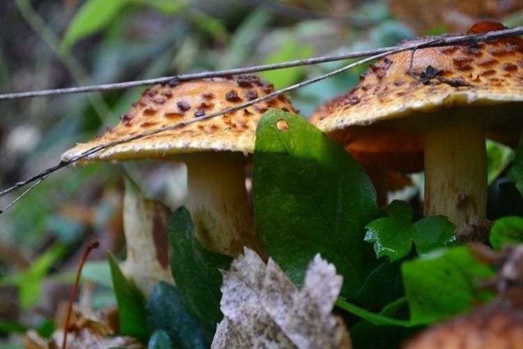 Mushrooms nature - ellophotography - carleigh_m | ello