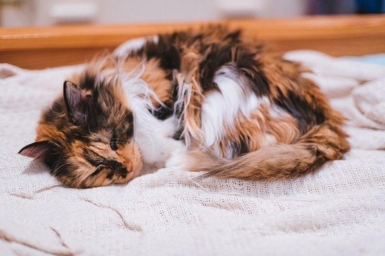 Throwback Tuesday time cat Lomi - mattmarquez | ello