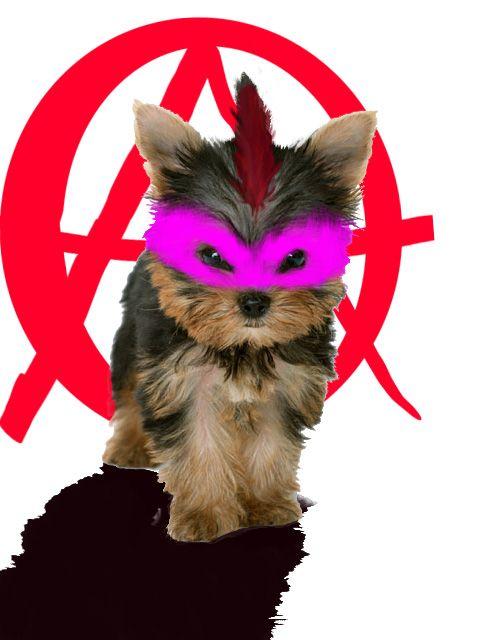 Anarchist - visualgalaxy | ello