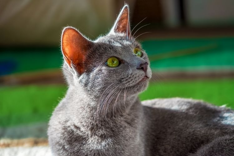 Robert Emmerich - 04 Cats Daphn - robertemmerich | ello