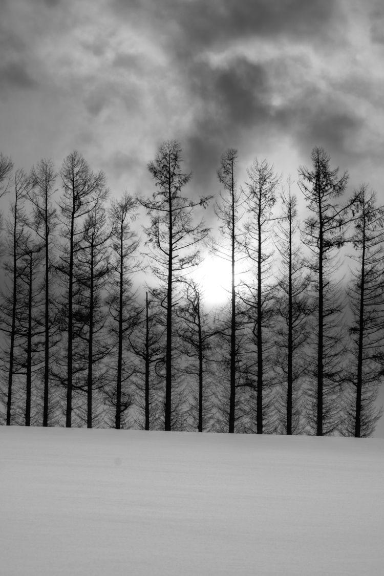 Trees Biei Hokkaido - fujifilm, fujixcamera - tedhamilton | ello
