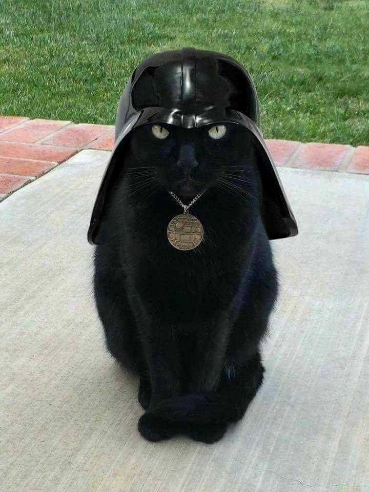 force strong fur - justineluartes   ello