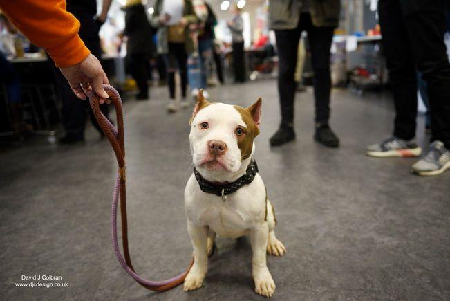 Life - dog, dogs, photographer, liverpoolphotographer - david_j_colbran   ello