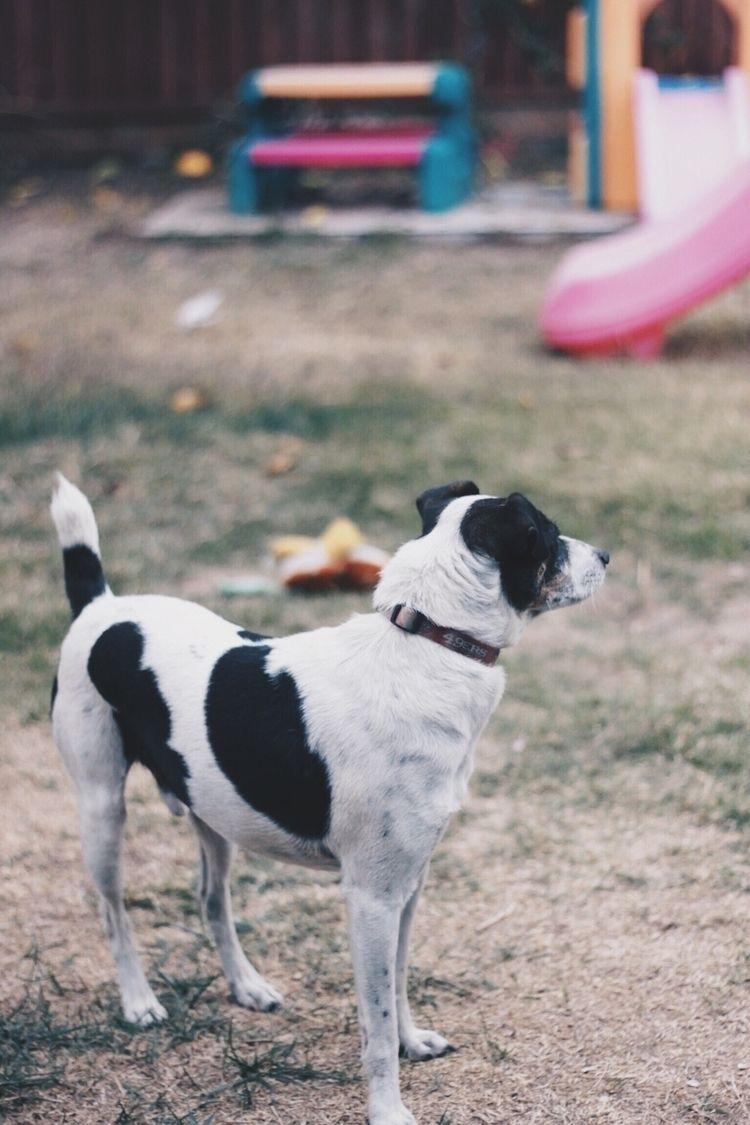 area - JackRussell, bestfriend, california - aldaphotography | ello