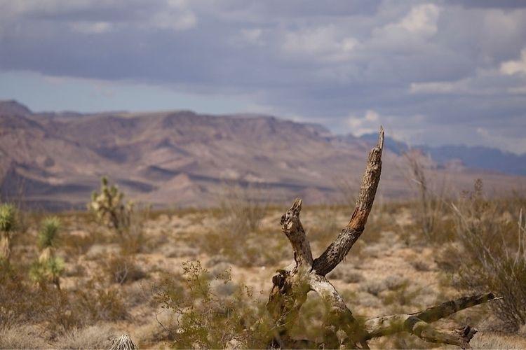 landscapes, desert, nature - bamps | ello