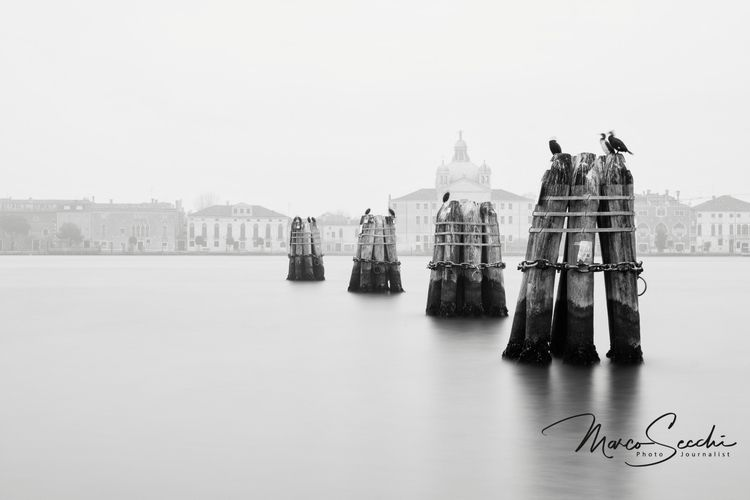 Cormorants facing Giudecca (Ven - msecchi | ello