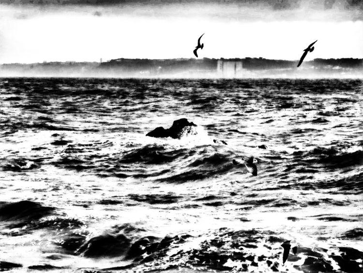 Sea rage - jorge_silva | ello