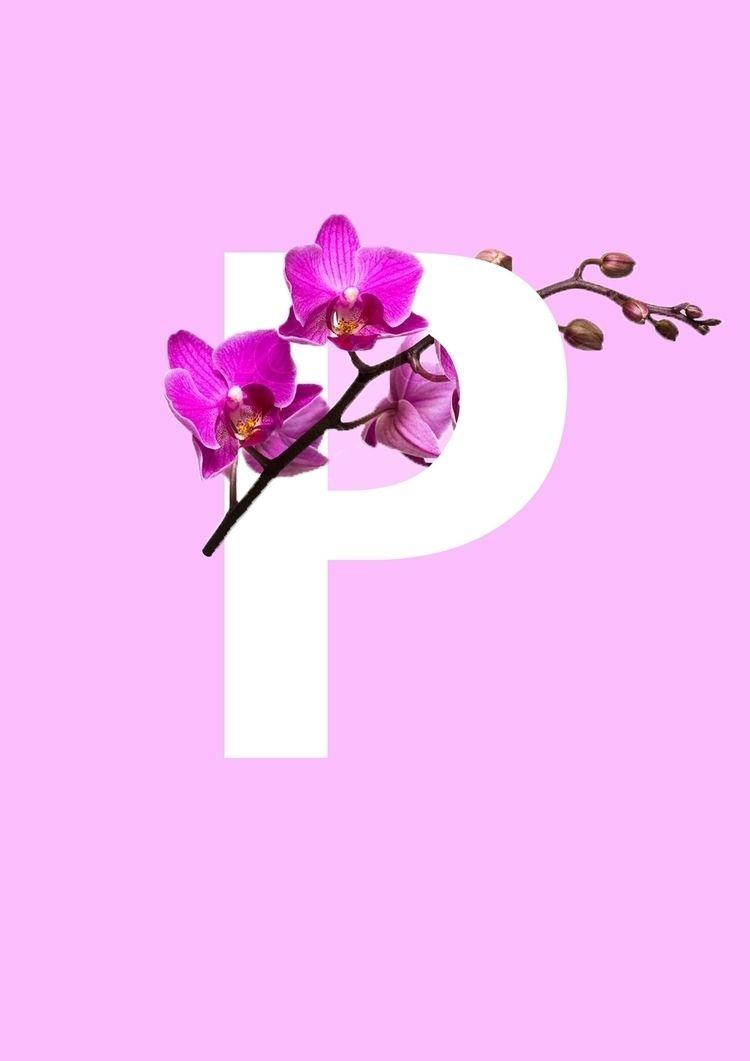 Orchid Typography Graphics - Tr - joshyknowles | ello