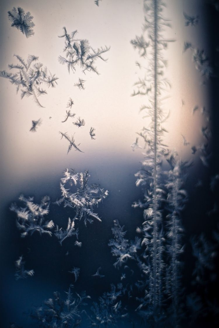 Frost bites window -12. Februar - oliviamorris | ello