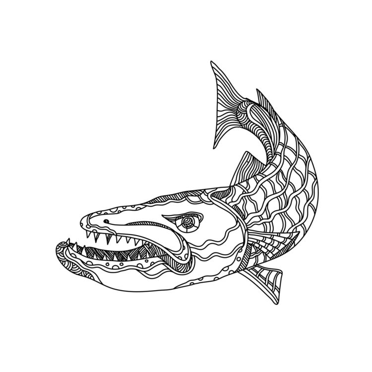 Barracuda Fish Doodle Art - BarracudaFish - patrimonio | ello