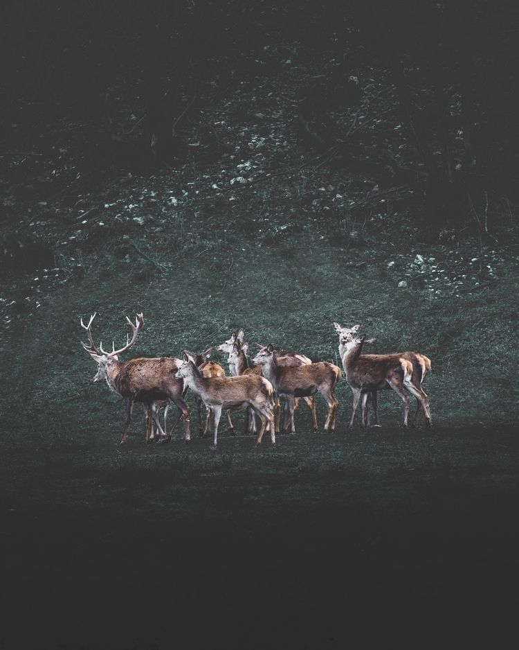 deer, wildlife, photography, trentino - douglasfir | ello