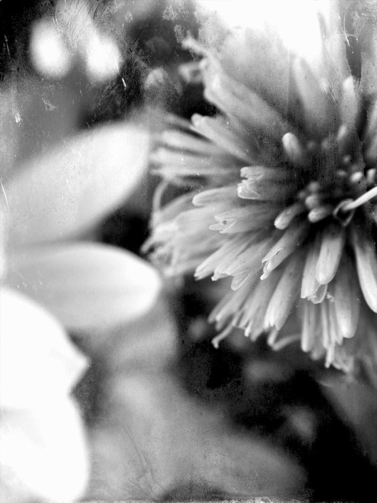 Flowers texture - lali_pop   ello