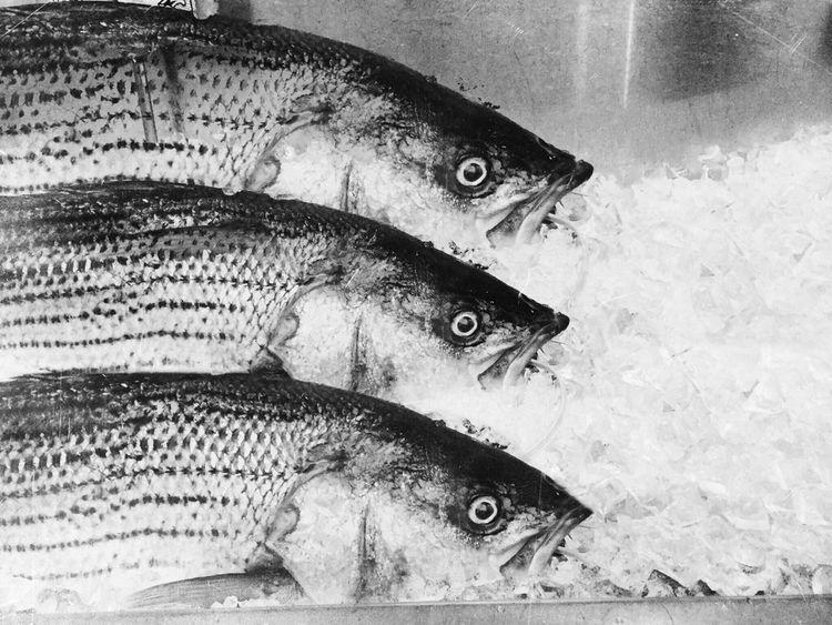 Fish photo manipulation, 🤷:type - lali_pop | ello