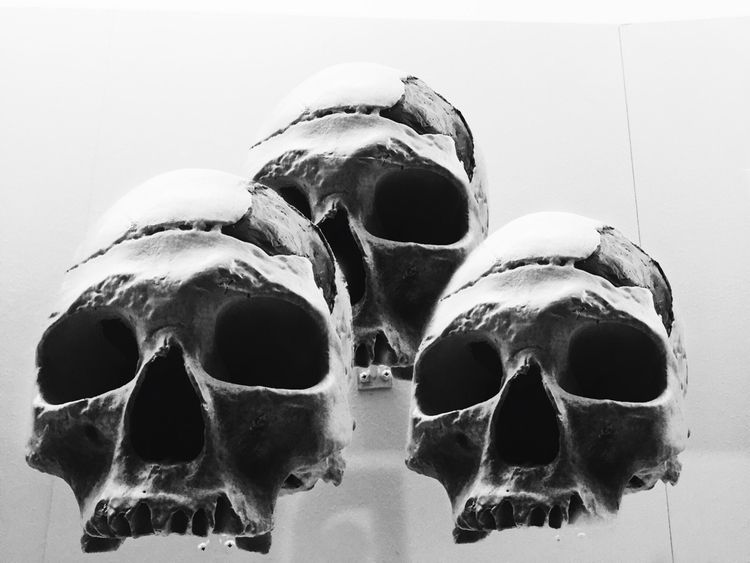 Ancient Skulls Photo Manipulati - lali_pop | ello