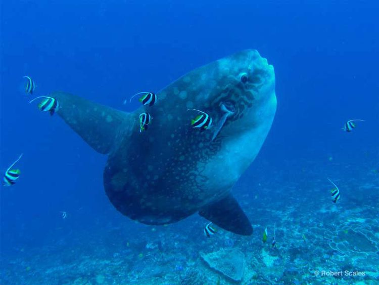 Scuba diving packages swim grea - atlantisbalidiving | ello
