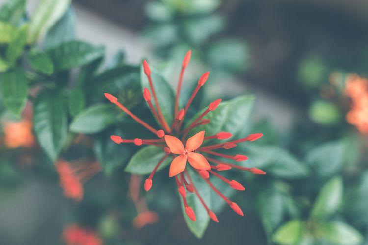 Asian flower background. Bali i - belart84 | ello