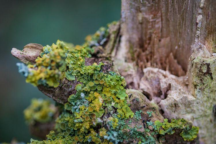 Mushrooms - ellophotography, ellomacro - gkowallek | ello