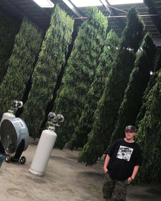 Ventilated Marijuana Drying Roo - karledmund | ello
