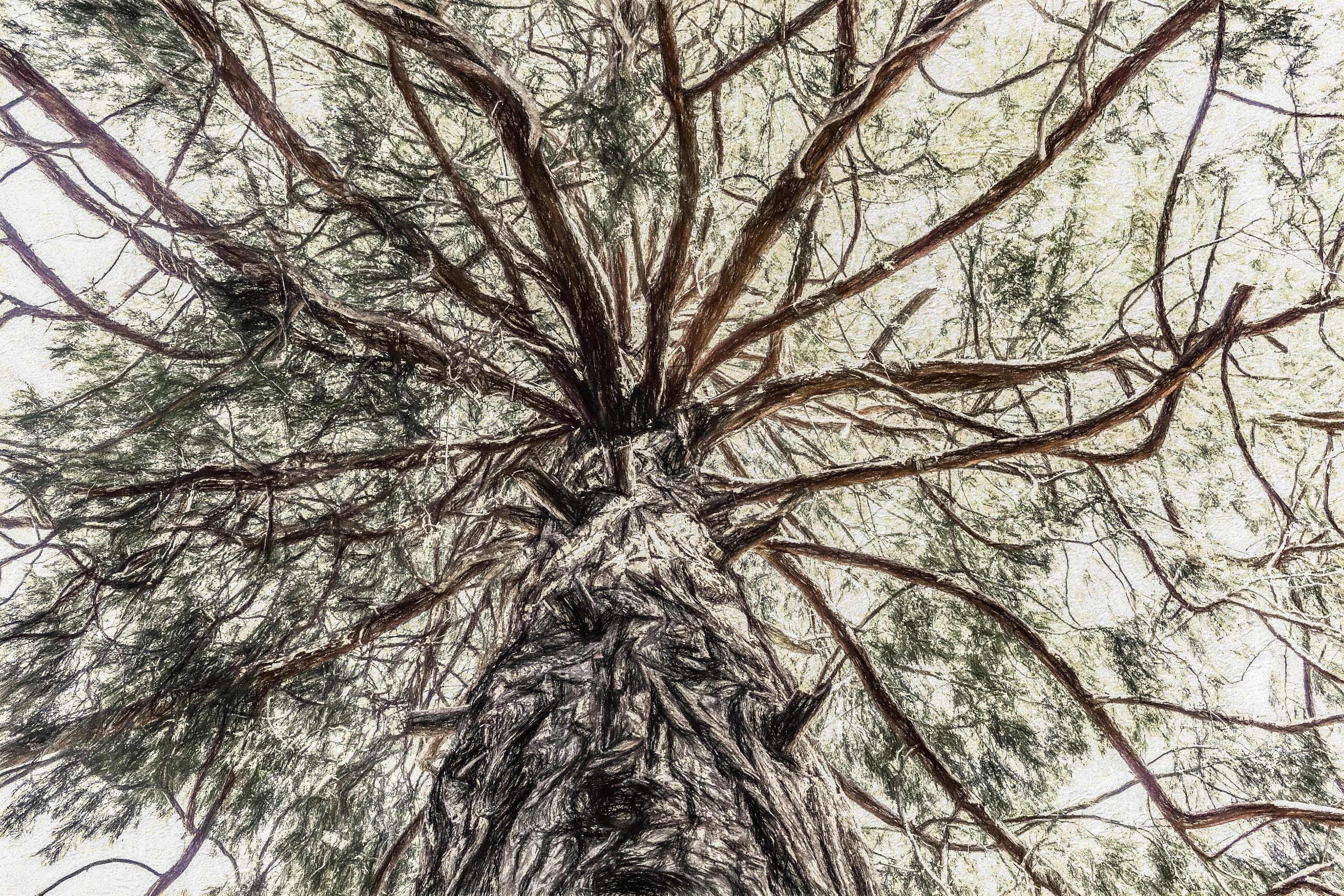 Wiseman Terrance Tree locally W - davidseibold | ello