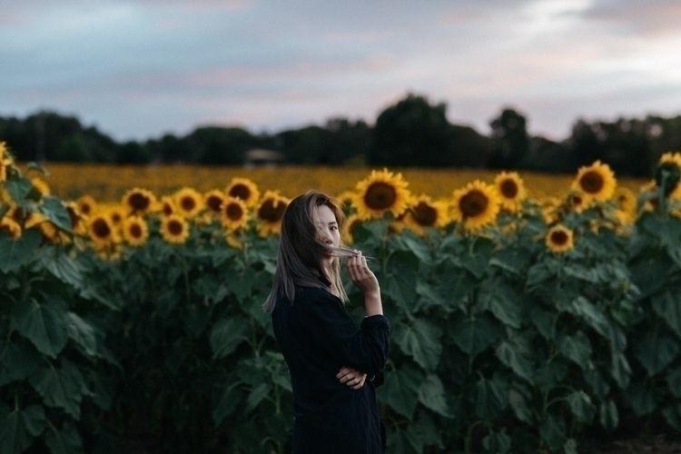 love - sunflowers - ceejaychong | ello