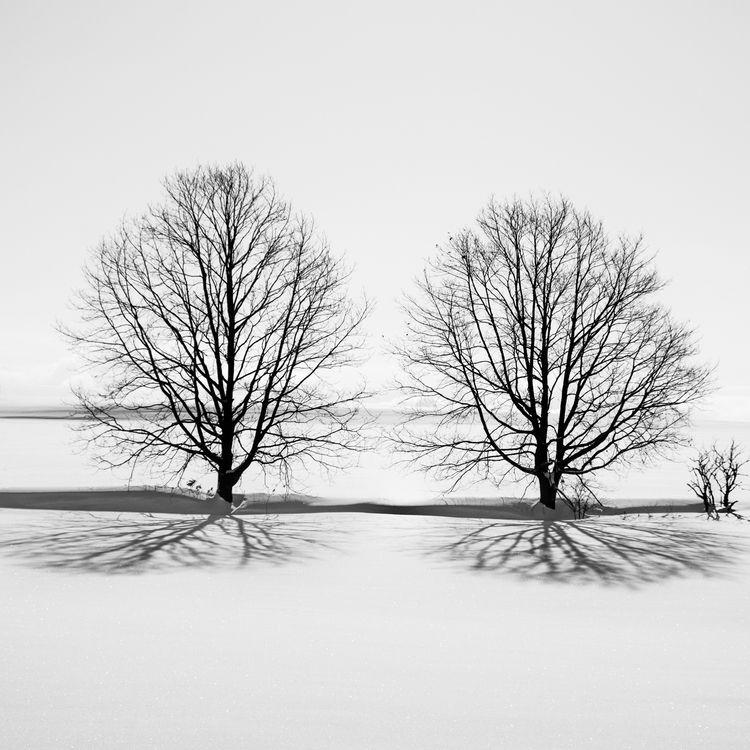 Trees Biei Hokkaido Related Pos - tedhamilton | ello