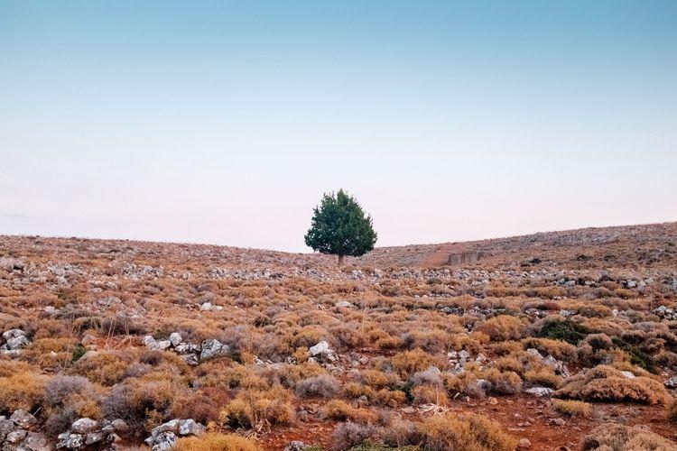 Serie Crete - tree, symetry, minimalism - adrienblot | ello
