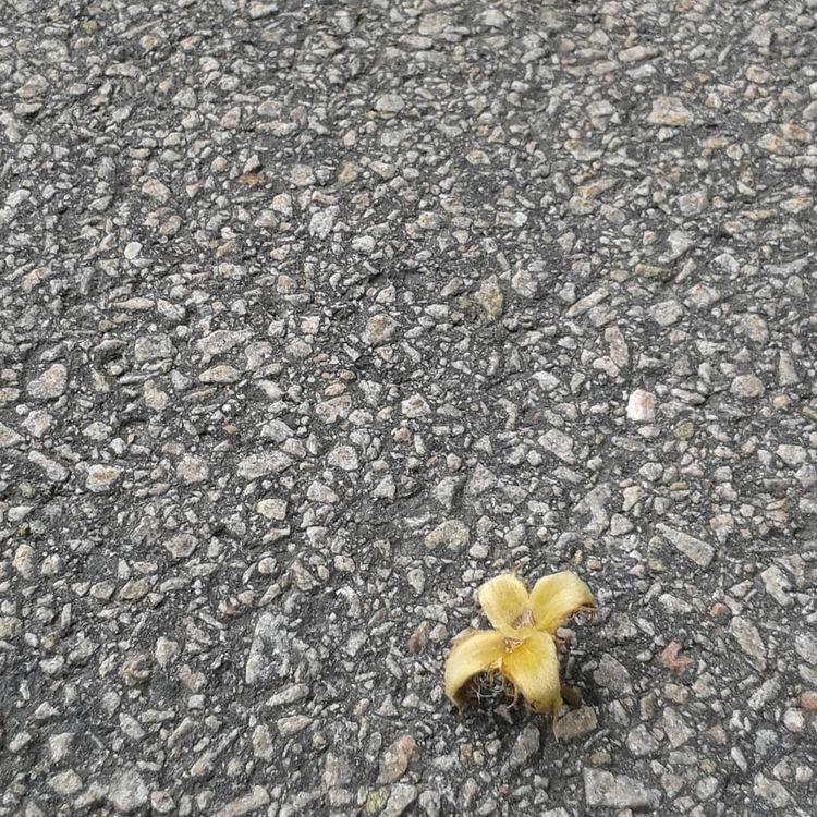 Att se världen ett asfaltskorn  - skogskyrkogardar | ello