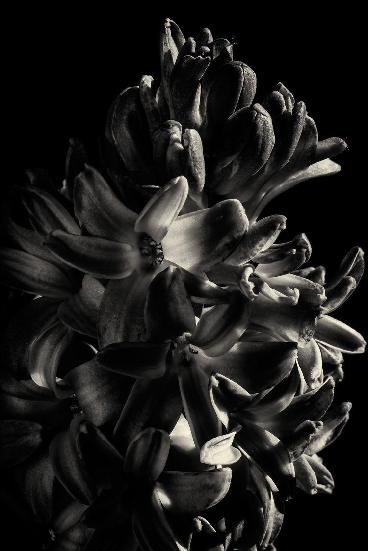 blue hyacinth - Munich - christofkessemeier | ello