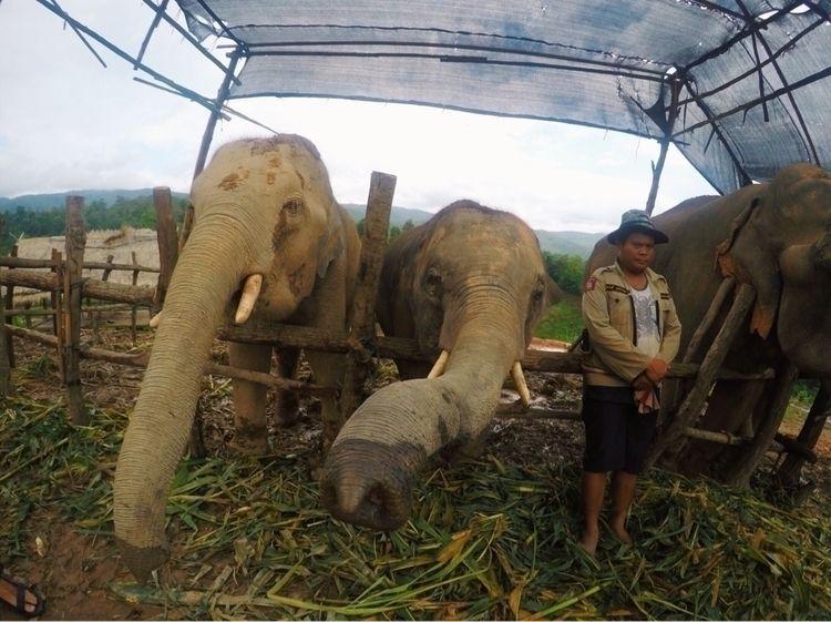 Elephant Sanctuary, Chiang Mai - _amyamit | ello