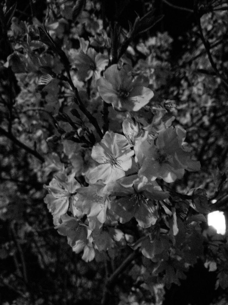 flowers, night, blackandwhite - underflow | ello