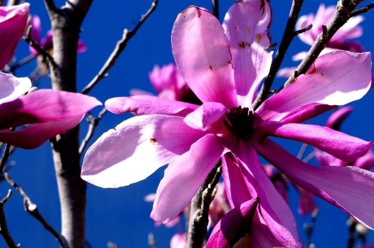 blooming ballet, petals aflutte - mafo   ello