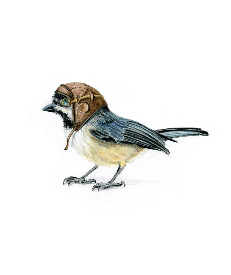 Aviator Chickadee color pencil - bschelling | ello