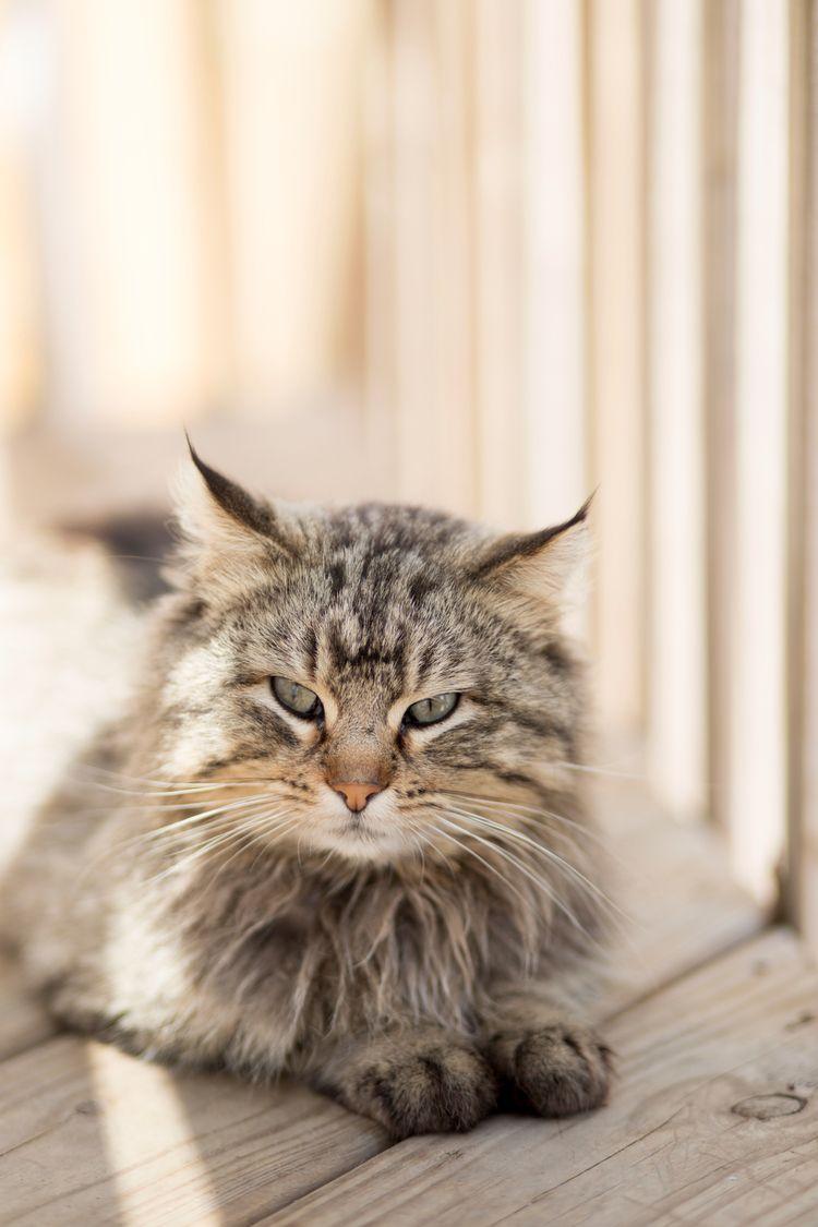 pissy baby. <3 - imisshim, cat - amyrenee121 | ello