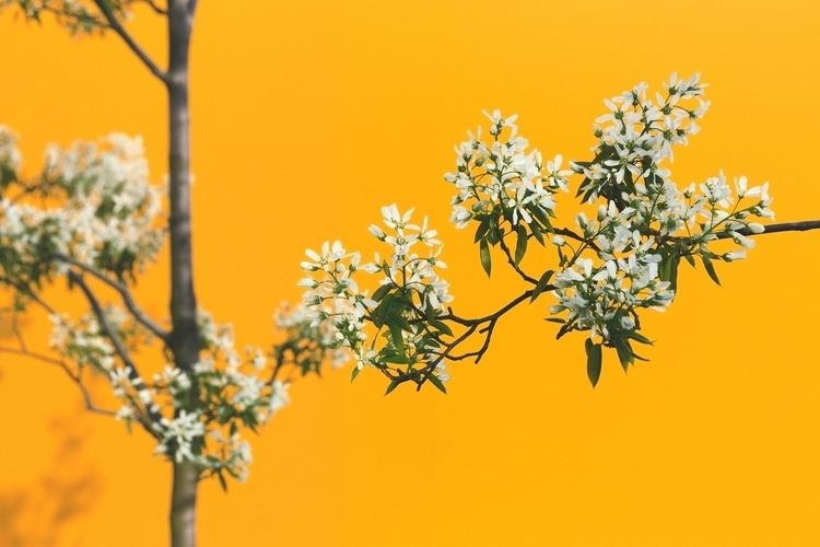 Spring...finally! __ :copyright - fabioburrelli_ph   ello