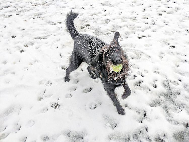 dogs playing spring snowstorm W - dennisjansen | ello