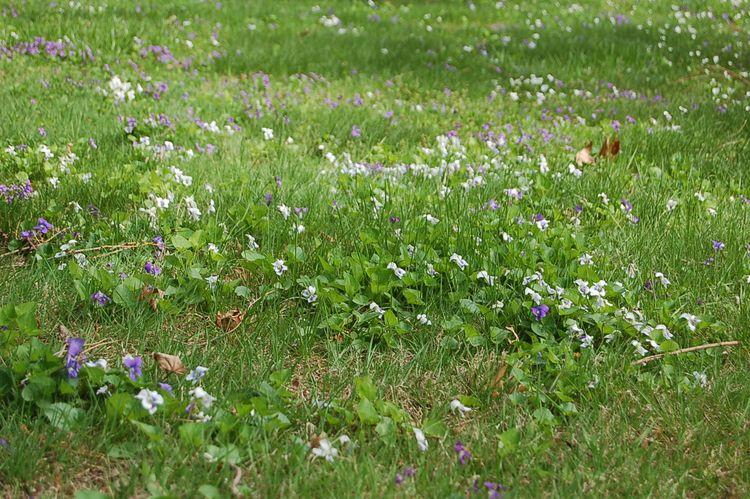 Summer Flowers - pebdesigns19 | ello