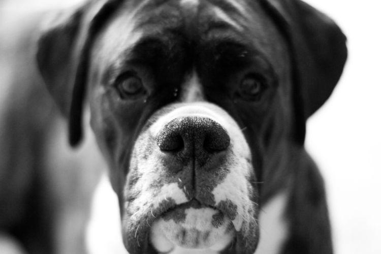 nose, dog, pet, blackandwhite - markwaring | ello